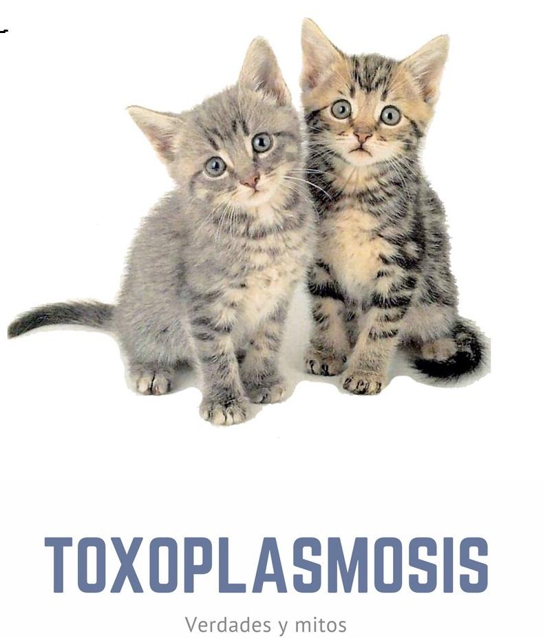 sintomas de toxoplasmosis en gatos