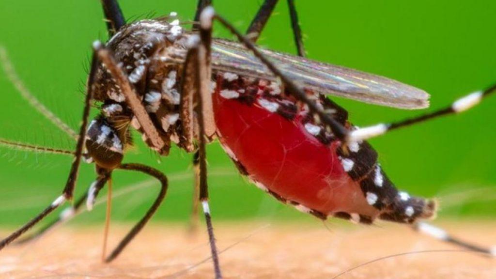 malaria sintomas y signos