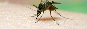 Malaria síntomas